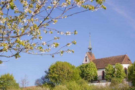 FRÜHLINGS-Inspiration: Kirschbaumblüte und Kirche St. Chrischona (4zu3)