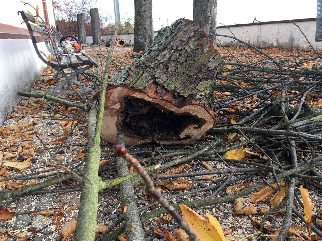 Aufgrund von Pilzbefall mussten die Rosskastanien auf dem Vorplatz der Kirche St. Chrischona im Dezember 2018 gefällt werden. Die Sicherheit wäre sonst durch faule Äste bedroht gewesen.
