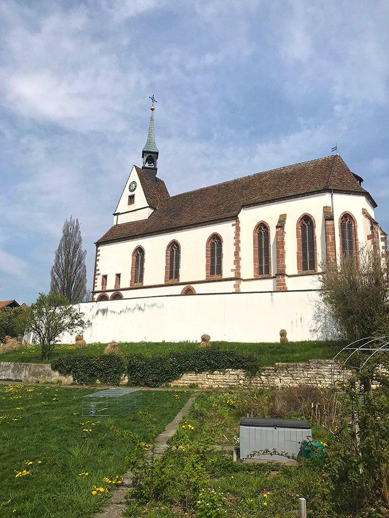 Die Kastanien waren so gross geworden, dass sie die Fassade der Kirche St. Chrischona verdeckt hatten. Ohne sie kommt die Kirche wieder besser zur Geltung.